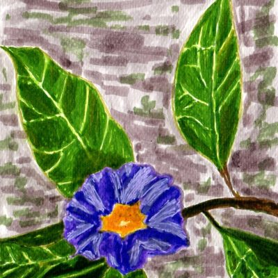 Flor del Jardín Botánico. 18x12cm. 50e.