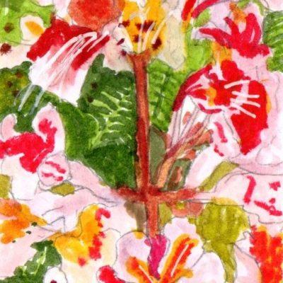 Flores de castaño. 15x9cm. 70e.