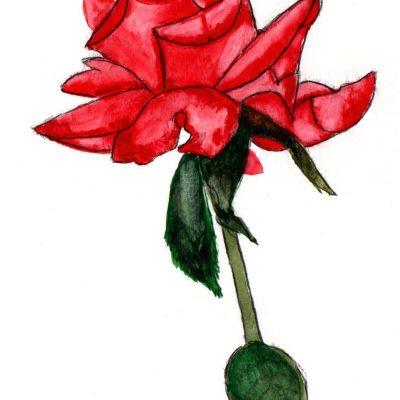 Rosa. 21x13cm. 35e.