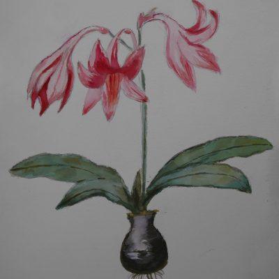 Flores y bulbo | 36x26
