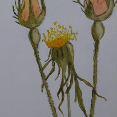 Rosas naranjas | 21x15