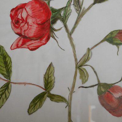 26. Rosas rojas. 29x21 cm. 150e.