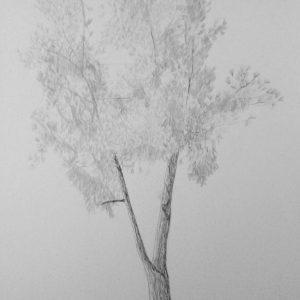 7. Pino del Parque de Fuente Nueva. Amalia. 39,5x24,5 cm. 140 euros