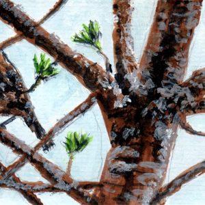 Gorrión en el pino. 10x16,5cm. 50 e.